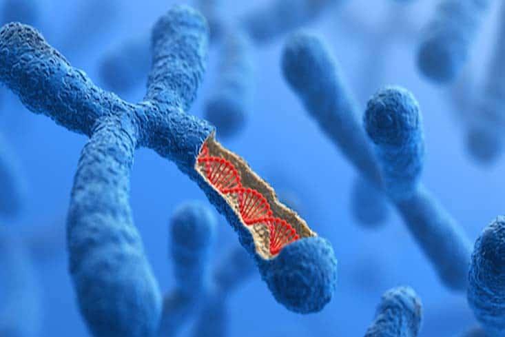 cromosomas-y-genes